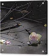 Blossom Rain 17 Acrylic Print