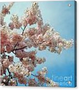 Blossom Sky Acrylic Print