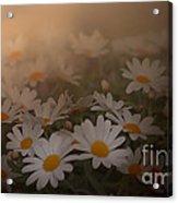 Blossom Acrylic Print by Sylvia  Niklasson
