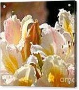 Blossom Top Acrylic Print