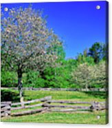 Blossom Trees In Farm, Davidson River Acrylic Print