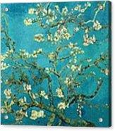 Blossoming Almond Tree Acrylic Print