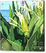 Blossoming Butterfly Ginger Acrylic Print