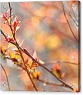 Blossoming Acrylic Print
