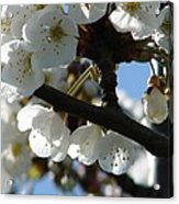 Blossoms 4 Acrylic Print