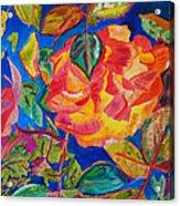 Blossoms Aglow Acrylic Print
