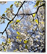 Blossoms And Leaves Acrylic Print
