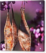 Blossoms And Seedpods Acrylic Print