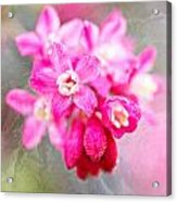 Blossoms Of Spring - April 2014 Acrylic Print