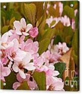 Blossoms Of The Rain 2 Acrylic Print