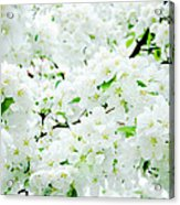 Blossoms Squared Acrylic Print