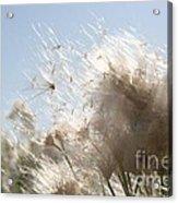 Blow Me Away Acrylic Print by Julie Lueders