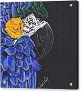 Blu And Gold Macaw Acrylic Print