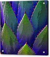 Blue Agave Acrylic Print