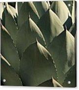 Blue Aloe Acrylic Print by Ellen Henneke
