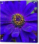 Blue And Bright Acrylic Print