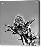Blue And Green Bw Green Plant In Front Of A Blue Sky Acrylic Print