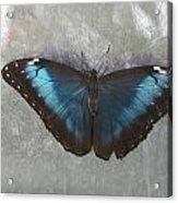 Blue And Grey Acrylic Print