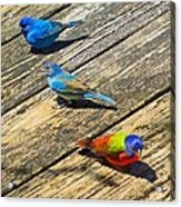 Blue And Indigo Buntings - Three Little Buntings Acrylic Print