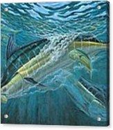 Blue And Mahi Mahi Underwater Acrylic Print by Terry Fox