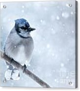 Blue And Snowy Acrylic Print