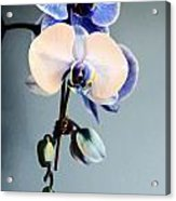 Blue And White Orchids Acrylic Print