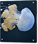 Blue And White Underwater Living Sea Acrylic Print