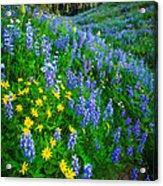 Blue And Yellow Hillside Acrylic Print
