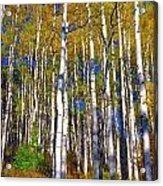 Blue Aspen On Grand Mesa Acrylic Print