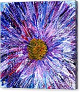 Blue Aster Miniature Painting Acrylic Print