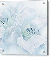 Blue Azalea Flowers Acrylic Print
