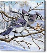 Blue Bandits Winter Afternoon Acrylic Print