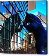 Blue Bear 5214 Acrylic Print