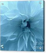 Blue Beauty - Dahlia Acrylic Print
