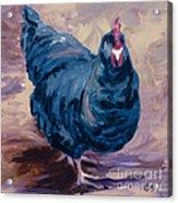 Blue Biddy Acrylic Print