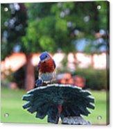 Blue Bird - I'm Looking At You Kid Acrylic Print