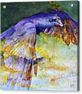 Blue Bird Acrylic Print by Janet Moss