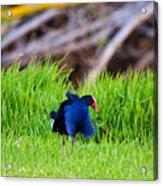 Blue Bird Park Acrylic Print