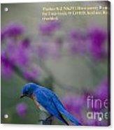 Blue Bird Praying Acrylic Print