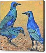 Blue Birds Of Happiness Acrylic Print