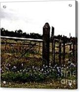 Blue Bonnet Fence V4 Acrylic Print