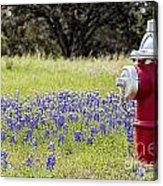 Blue Bonnets Fire Hydrant V2 Acrylic Print