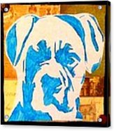 Blue Boxer Acrylic Print by Ashley Reign