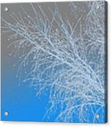 Blue Branches Acrylic Print