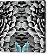 Blue Butterfly And Antenna Acrylic Print