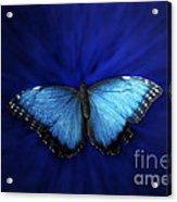 Blue Butterfly Ascending 02 Acrylic Print
