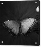 Blue Butterfly Ascending Bw Acrylic Print
