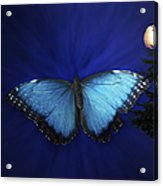 Blue Butterfly Ascending Acrylic Print
