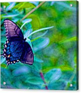 Blue Butterfly Fantasy Acrylic Print