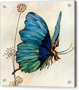 Blue Butterfly II Acrylic Print by Warwick Goble